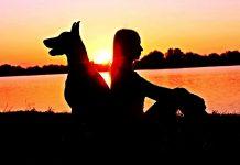 Scegliere la miglior bara per il proprio cane è la più grande prova di amore che gli si possa dare