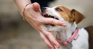 Il comportamento del cane: come gestire l'aggressività di un cucciolo