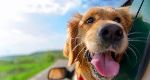 Tutto quello che si deve sapere prima di partire con il proprio animale domestico