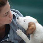 Traduttore per animali ? Amazon lancia la sfida tecnologica