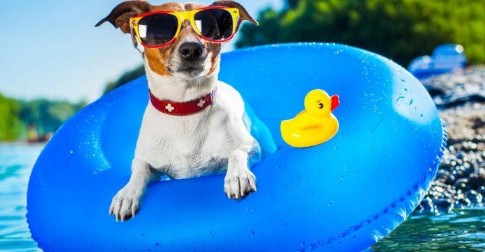 Vacanze pet-friendly, consigli per le vacanze con Fido