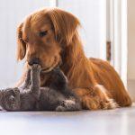 Alimenti per cani: come scegliere i prodotti più adatti alle loro esigenze